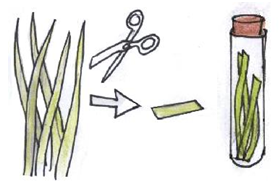 Сбор проб растений в пробирку